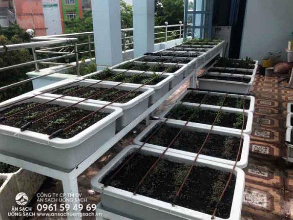 Những hạt giống đầu tiên bắt đầu phát triển