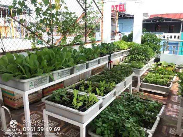 Thực hiện xong sứ mệnh trồng rau sạch tại nhà của chúng tớ